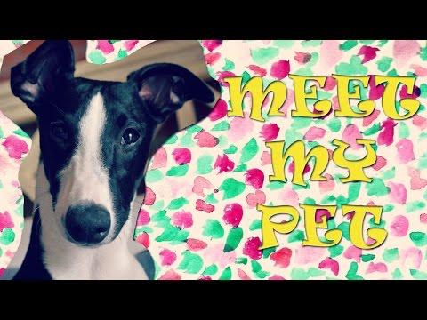MEET MY PET | LES PRESENTO A MI MASCOTA | PET TAG
