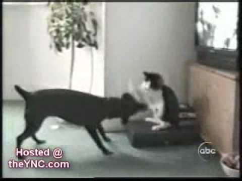 Funny cats!!! Śmieszne filmiki z kotami!!!