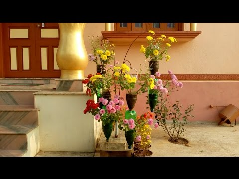 Chandramallika planting in hanging bottles for home decoration