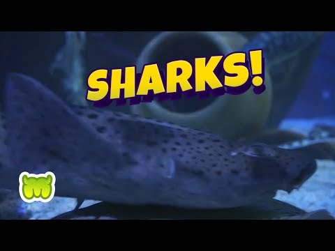 Moshi Marine Force: Sharks @ SEA LIFE!