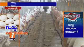 Eggs Price Increases In Rajahmundry | Poultry Industry Express Happy | iNews - INEWS