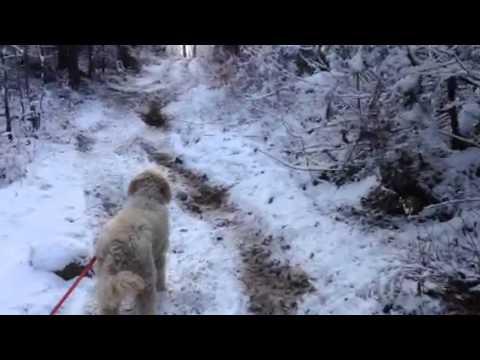 26 secondes de marche dans l'bois à Chertsey