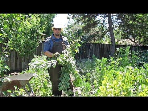 Keepin' It Clean   Springtime Garden Maintenance & Tips