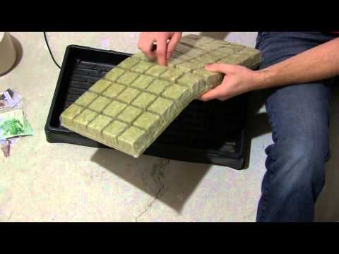 How To Start Seeds For Hydroponics For Beginners EZ