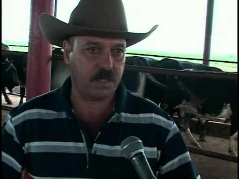 Aportará más carne de ganado vacuno ganaderos cienfuegueros