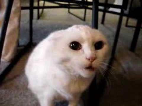 Кошки бывают не всегда милыми
