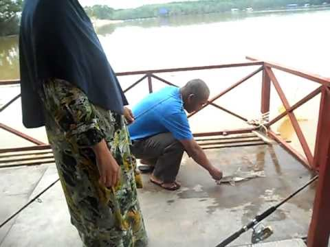 Mancing Kakap di sg air payau.