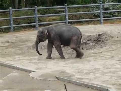 Baby Elephants and Adult Elephants in Oregon Zoo - Funny Animals