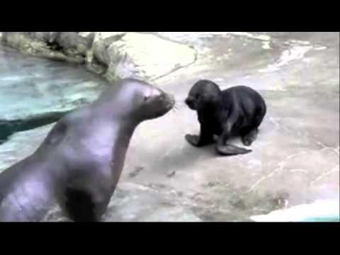 Animais engraçados gritando!