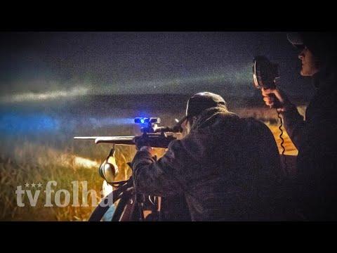Da caçamba de uma picape, atirador usa um fuzil para matar javali de 90 kg