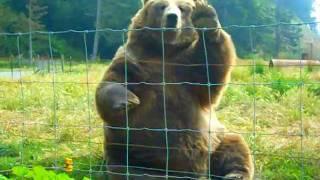 来園してくれた人に手を振ってくれるクマが可愛い