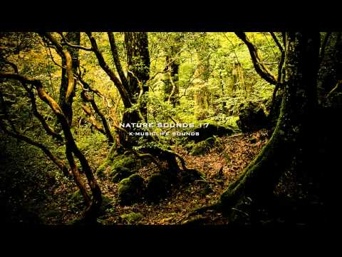 Nature Sound 17 - THE MOST RELAXING SOUNDS