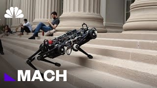 Cheetah 3 Is A Blind Robot That Doesn't Need Sensors To Navigate | Mach | NBC News - NBCNEWS