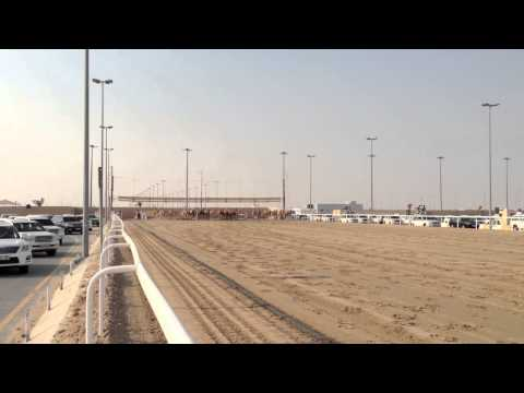 Camel race in Qatar