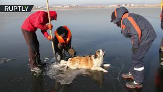 Poor Puppy! Rescuers pull helpless dog from frozen lake in Siberia - RUSSIATODAY