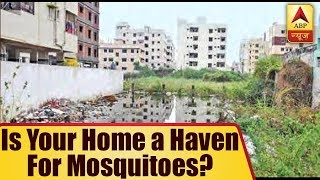 There Could Be An FIR Against You If Mosquitoes Breed In Your House - ABPNEWSTV