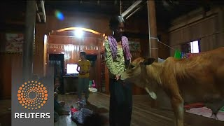Cambodia widow sees dead husband in five-month-old calf. - REUTERSVIDEO