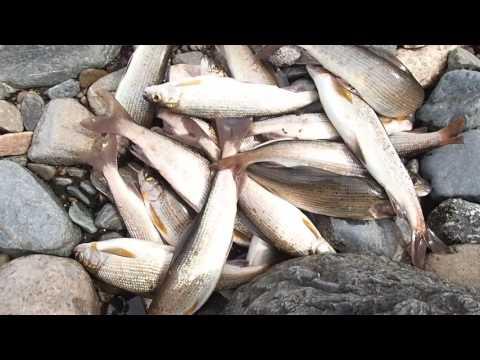рыбалка на мрассу осенью