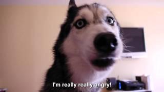 Mishka, si anjing yg bisa ngomong