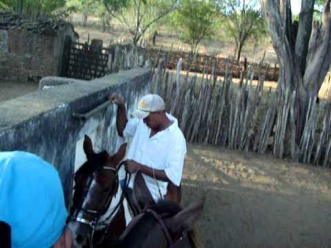 treinando cavalos de vaquejada(xodo e foguinho)