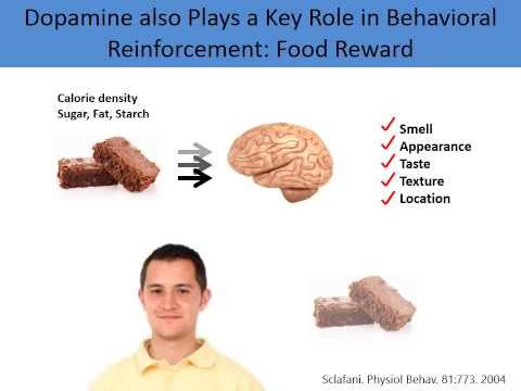 Why Do We Overeat? A Neurobiological Perspective