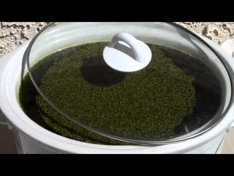 How To Make Medical Marijuana Tonic & Tincture (Alcohol Infused w/Cannabis):THE GREEN MONSTER RECIPE