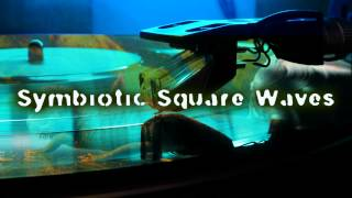 Royalty Free Symbiotic Square Waves:Symbiotic Square Waves