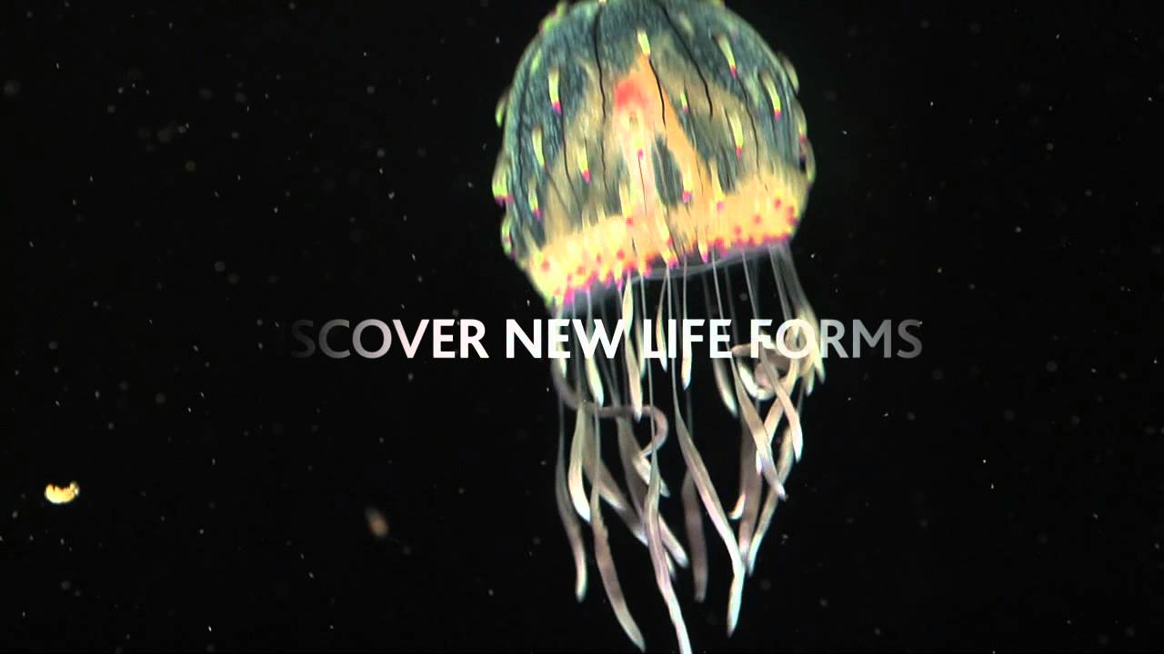 Jellyfish Odyssey