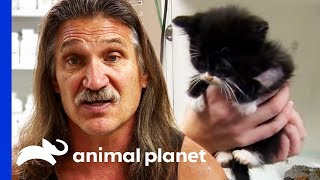 3 Week Old Kittens Rushed To The Clinic For Emergency Care | Dr. Jeff: Rocky Mountain Vet - ANIMALPLANETTV