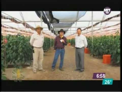 Produccion de Hortalizas en Invernaderos en Moctezuma SLP