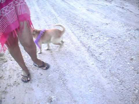 ¿ Se Puede Salvar un Perro del Parvovirus Canino ?