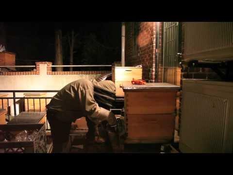 New York City Urban Beekeeping Documentary: The Beekeeper