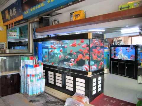 Chinese Ornamental Fish Market