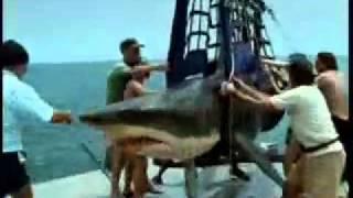 Акула проглотила человека