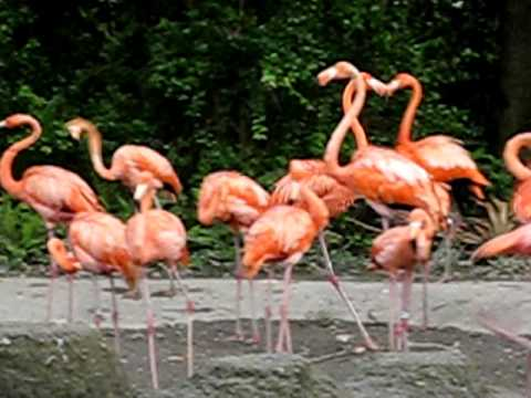 Zoo Baby flamingo.AVI