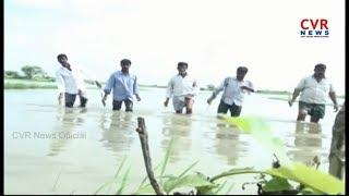 చెరువులను తలపిస్తున్న పంట పొలాలు - విలవిలలాడుతున్న రైతులు | RaitheRaju | CVR NEWS - CVRNEWSOFFICIAL