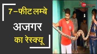 Odisha: 7-feet long python rescued from a house inMalkangiri   7-फीटलम्बेअजगरकारेस्क्यू - ZEENEWS