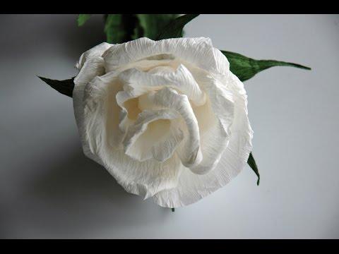 Kwiaty z bibuły - białe róże   DIY