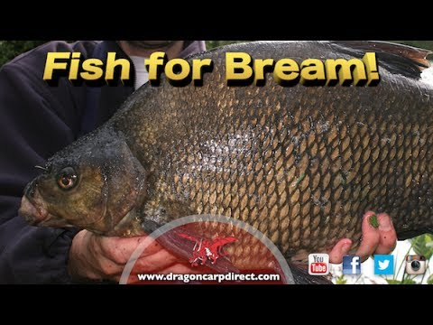Fish for bream! See what gear will catch you more fish!