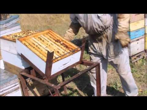 Выдувание пчёл с помощью воздуходувки. Пасека Сущенко И.Н.