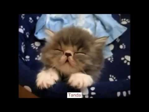 Video Kucing Lucu - Lucu Cat Video Ever- Funny Video - Binatang Lucu Video Hewan Lucu
