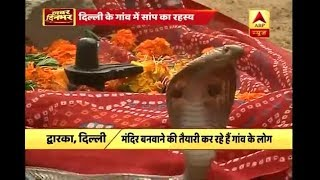 Delhi: People offer prayers to Cobra snake as it kept coming to same spot time and again - ABPNEWSTV