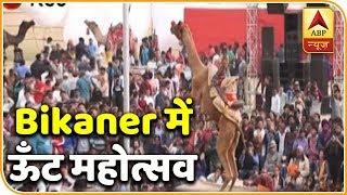 Bikaner's majestic camel festival catching tourists' attention - ABPNEWSTV