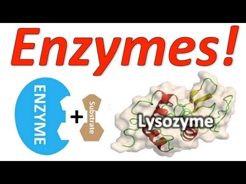 Enzymes: Mr. W's Enzyme Song