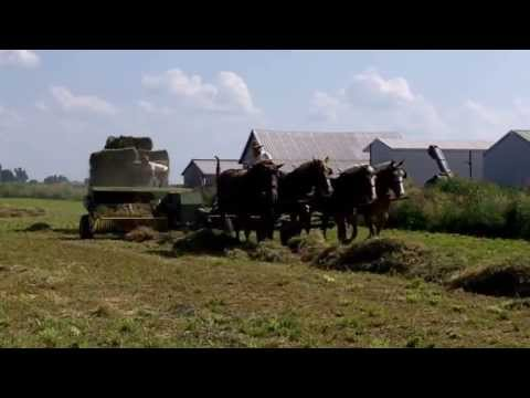 Amish with 4 Horse Hitch Baling Hay