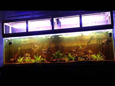 125 Gallon Freshwater Planted LED's - Amazon Blackwater Biotope