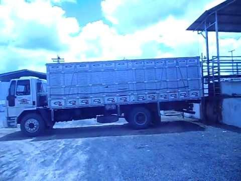 Caminhão de boiadeiro de Alagoinhas BA