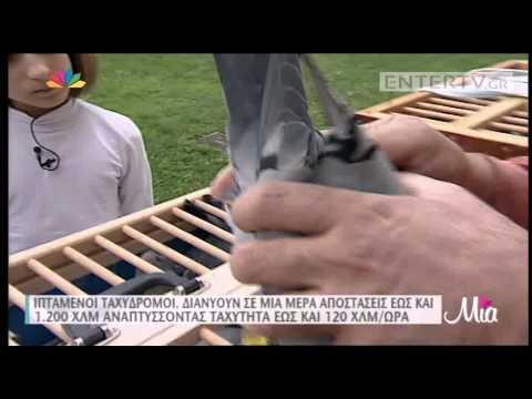 Entertv: Τατιάνα Στεφανίδου: Βγήκε από το στούντιο για να πετάξει ταχυδρομικά περιστέρια!