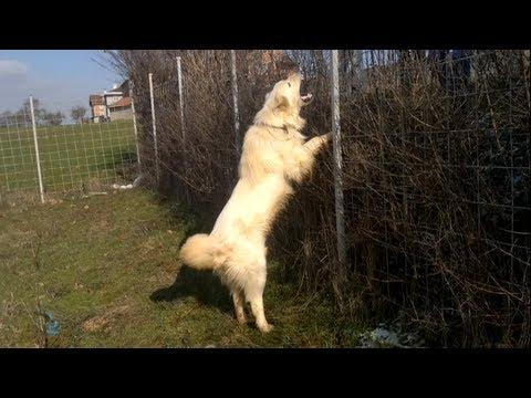 Dangerous Dogs - Qente e rrezikshem