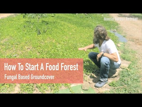 Free Permaculture Course Tips: How to start a Food Forest - Living Groundcover & Soil Builder